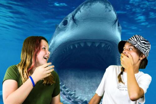 Tamara  Linda – Žraloky